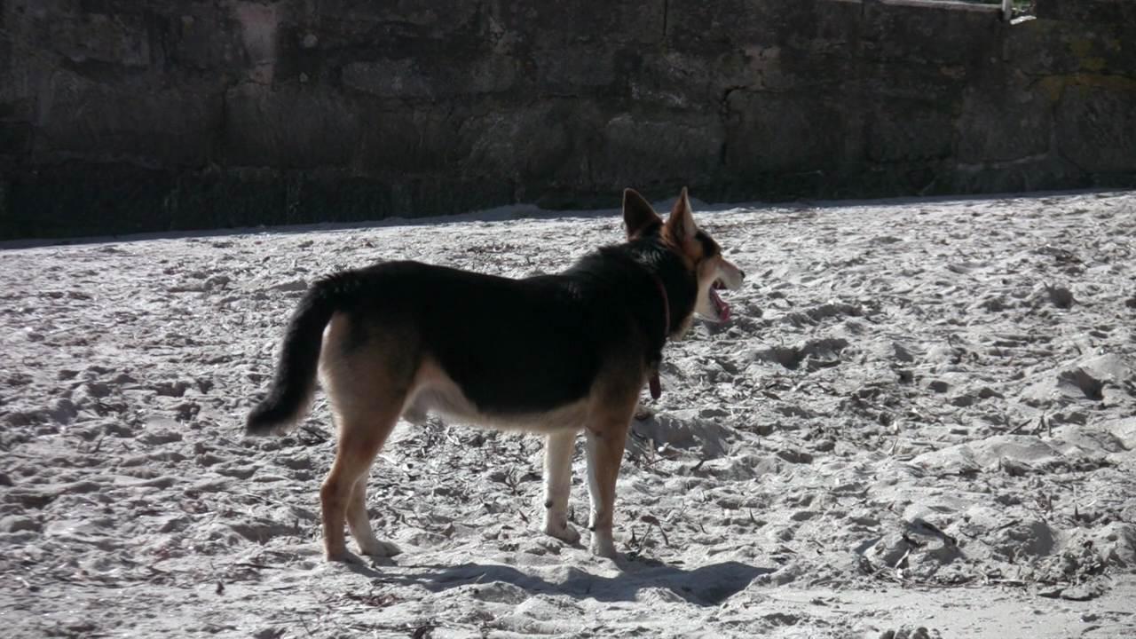 Simpel hiekkarannalla
