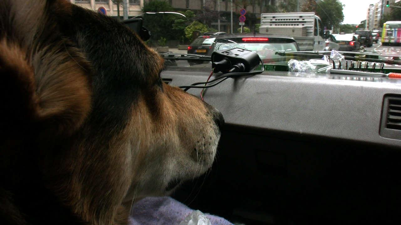 Simpel-koira Luxemburgissa